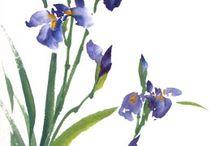 Цветы Сеи