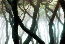 Puita / Trees