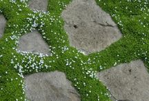 Garden Pathways / Things to do with your garden path.