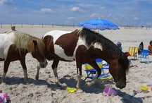 Chincoteague Earns Another Accolade :)