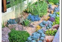Botani-cool!