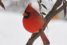 Birds / by Dawn Larimer
