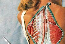 2015 Anatomy / by Laura Wassermann