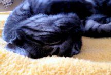 My cat Pepper .