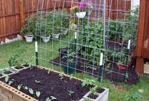 horta & plantio