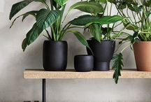 Indoor Plants / Ideas for easy DIY pots and large or small indoor plants.  Styling and decor ideas in the living room, bathroom or bathroom.  Plants for low light areas.  Australian plants.  Plants that help with clean air.