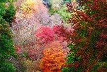 Seasons: Autumn (Fall)