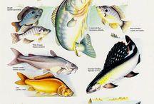 Fish's