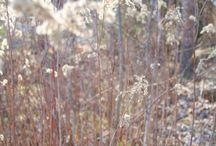 Kevät / Spring / Puutarhani kevät alkaa jo silloin, kun mikään ei vielä kuki ja jatkuu aina tulppanien kukintaan saakkka.