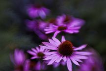 Power of Flowers / www.magdawasiczek.pl