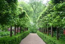 Hornbeams, Hedges and Rows of Trees