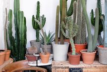 Cacti and Plants