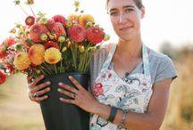 Creating a Cut Flower Garden