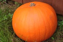 Time-lapse Pumpkin 2015 / Time-lapse photos of a pumpkin as it decomposes