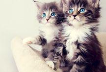 nyan nyan / kedi, neko, cats, cute