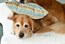 Cani & Gatti / Amanti degli animali volete vedere foto dolcissime dei nostri amici a quattro zampe?Questa cartella é l'ideale per voi....