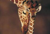 Animals  / by Cheryl Lange