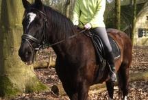 paardrijden / heel leuk paardrijdem