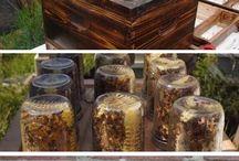 beehives honey