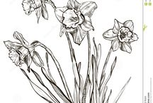 Flowers drawing of daffodil