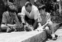 Those Amazing Hemingway cats ❤️