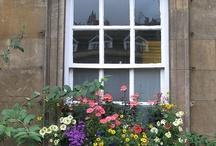 Windowboxes