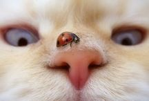 cats - kittens