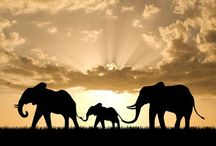 Elefante colorido: QUE COR?