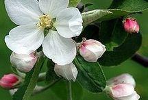 Flores de árvore