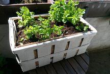 Garten & Balkon / Schaffen einer Wohlfühloase im heimischen Garten oder auf dem Balkon.