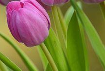 Virágok / Gyönyörű képek virágokról