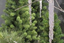 Christmas - PVC & Trees / Christmas