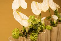 Cut Anthurium designs for Fiore Anthuriums / Flower Factor designers love to work with cut Anthuriums. Fiore Anthuriums has beautiful varieties so the possibilities for flower arrangement with Anthuriums are endless.