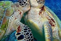 Turtles / by Catherine Seiler