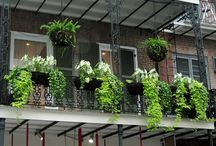 Balconies, terraces & plants
