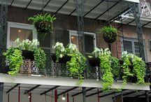 Balconies, terraces & plants