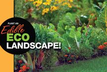 PLANT YOUR OWN EDIBLE LANDSCAPE! / Have you ever considered replacing areas of your lawn and landscaping with flourishing edible gardens?    LEARN MORE: http://hmlconstruction.ca/blog/2016/04/22/plant-edible-landscape/