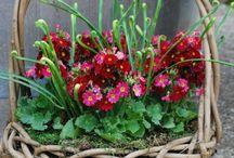 Çiçek ve peyzaj