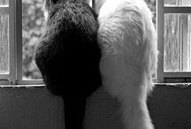 ❤ Kitties ❤