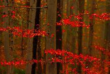 bessen  herfstkleur tafel 2015