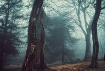 fotos paisagens/aleatórias