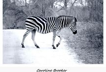 Caroline Brooker - Photography & Design