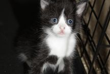 Fundraising for FRFA'S rescued cats and kittens