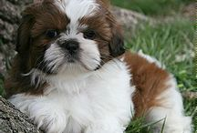 it ' s so cute puppy