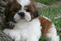 it ' s so cute puppy