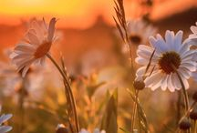 Flowers make my heart sing
