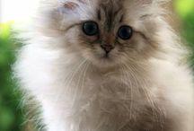 Kitten!❤