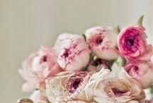 flowers / flowers ?.?
