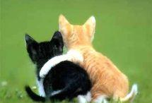 Milujeme zvířata :)