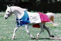 les chevaux qui nous on marqué